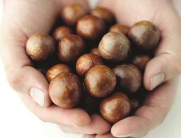 Forever Young – Macadamias sind auch gut für Haut und Haare