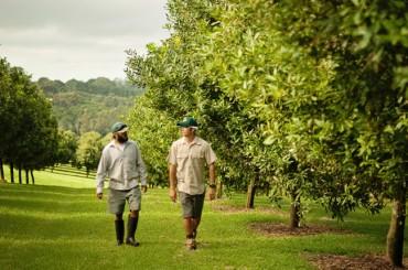 Meet the Team – Die Männer hinter den Kulissen bei der Macadamia-Ernte