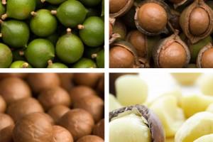 Australische Macadamia Nüsse, Macadamia Nuss, Macadamias, Macadamianüsse, Macadamianuss