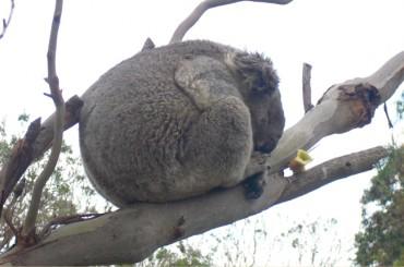 Aussi-Wahn und Outback-Fieber: Was mir an Australien am meisten fehlt (Teil 2)