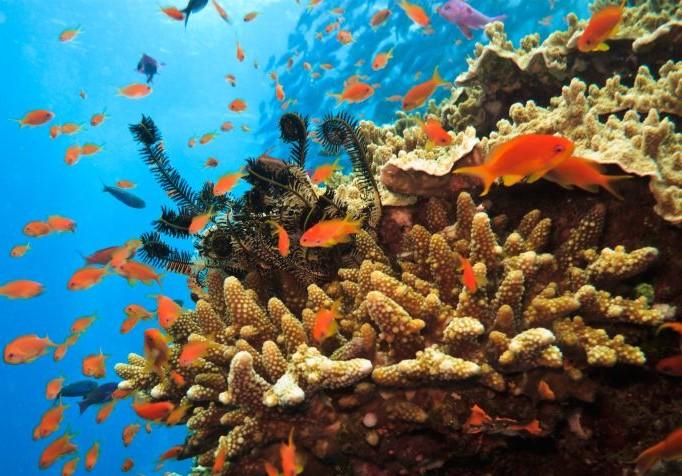 Unterwasser in Australien – Eine Welt, die einen Besuch wert ist