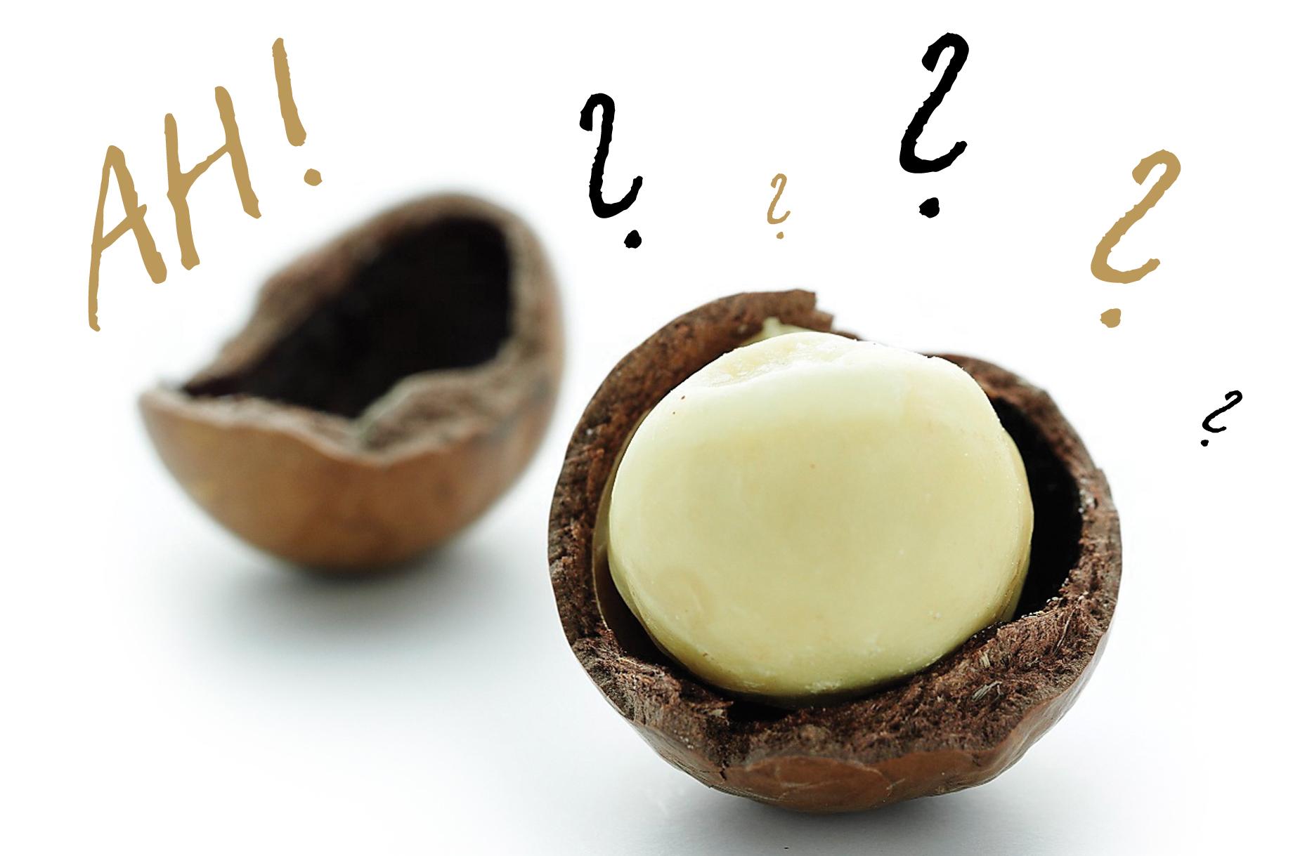 Fünf spannende Macadamia Fakten