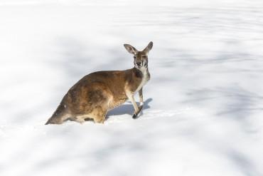 Schnee in Australien!?