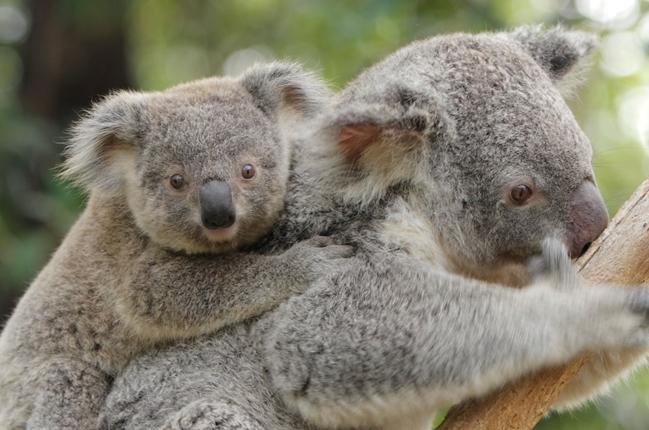 Die einzigartige Tierwelt Australiens
