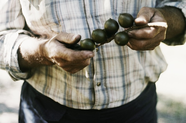Macadamia Insights: Unser Farmer Ron