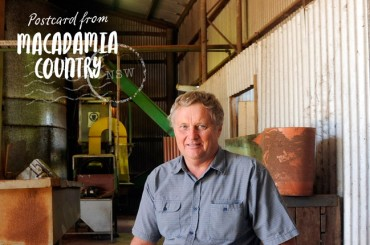Macadamia Insights: Unser Farmer Lindsay