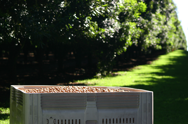 Macadamia Insights: Unsere Farmer Nic und Katherine