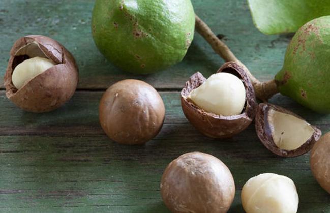 Food Facts: Warum wir im Winter Macadamias essen sollten