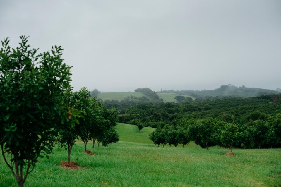 Nachhaltigkeit: Macadamias für Artenvielfalt