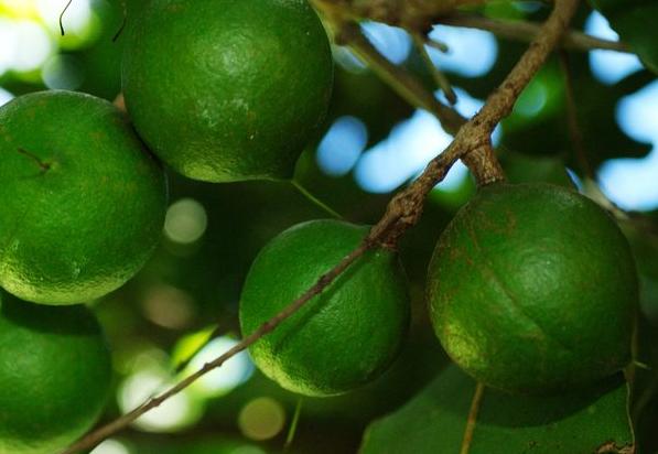 7 faszinierende Dinge, die man mit Macadamias machen kann