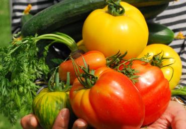 How to: Nachhaltig einkaufen wie ein Kochprofi
